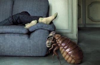 Как избавиться от клопов в диване самостоятельно