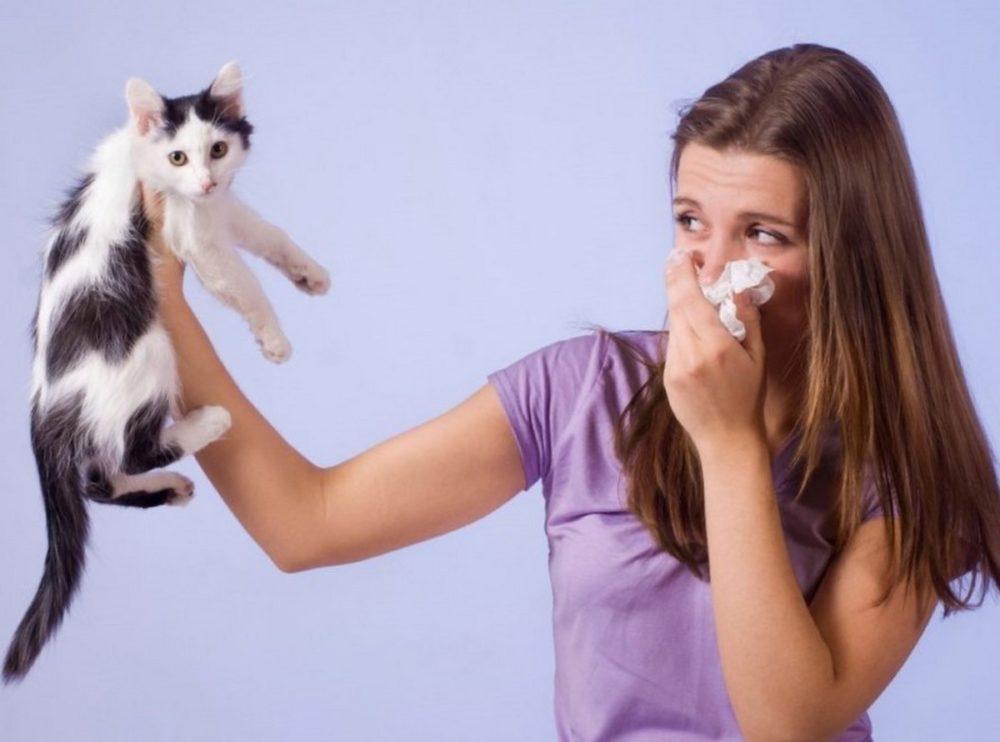 как избавиться от запаха мочи кота